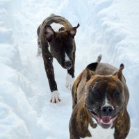 Phoca Thumb M Old School Kennels Never Back Down3