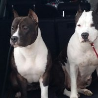 Ch Old School Kennels Black Lady & Aura Meiga Boneca